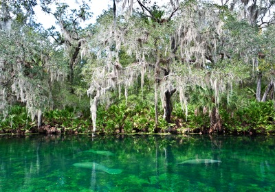 Visit Central Florida: The Beautiful Springs of DeLand