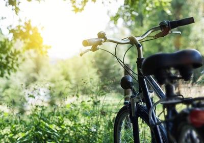 Biking in Volusia: Our Favorite Trails