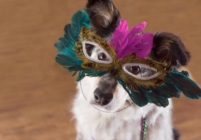 DeLand's Annual Mardi Gras Dog Parade