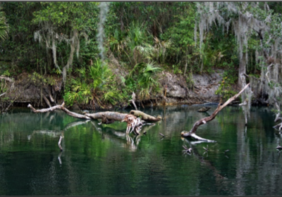 Exploring the Athens of Florida