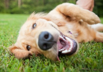 Dogs in DeLand: Celebrating Our Paw-Friendly City