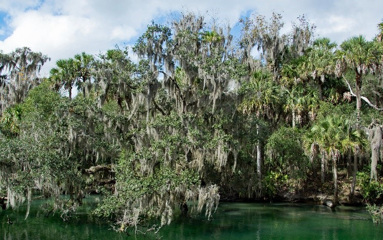 Inside DeLand's Springs: An Enchanting Aquatic Experience